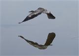 trick flying