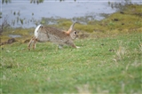 Easter Bunny in front of Family hide 14/04/15