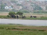 Lodmoor Bullocks