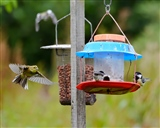 Incoming! feeding time at the bird table