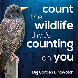 Count the Wildlife that's Counting on You