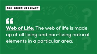 Web of Life Explanation