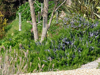 Rosemary the Reliable - Gardening for wildlife - Homes for
