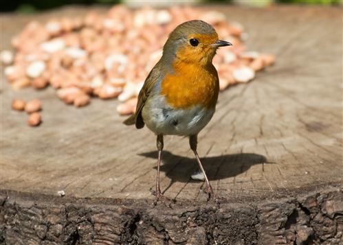 bird city chat rooms Узи тошиба, узи тошиба купить, узи тошиба онлайн, узи   узи тошиба.