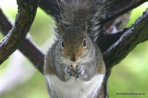 squirrel sex chat Hledáte squirrelcute zajistili jsme to zkoukněte profil squirrelcute profil na livejasmin.