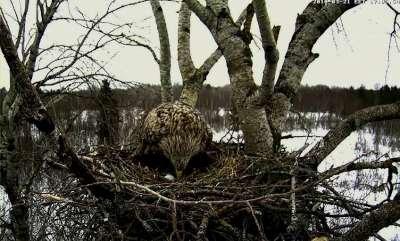 Estonian nest - 1st egg