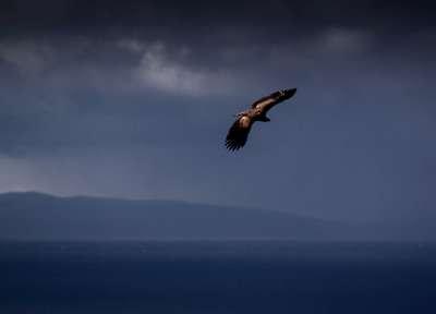 Oran - Photograph James MacDonald