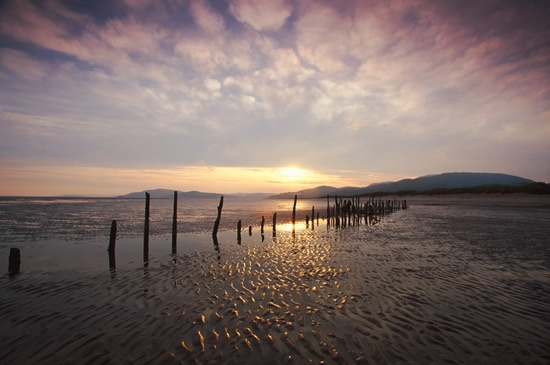 Mersehead Sands at low tide by Andy Hay (rspb-images.com)