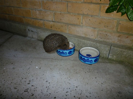Birds And Hedgehogs Wildlife In The Garden Homes For
