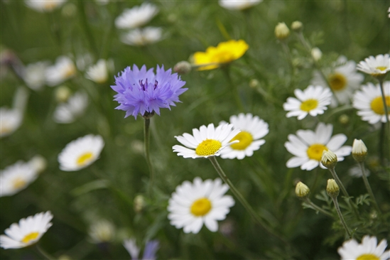 Wildflowers. Image by Andy Hay (www.rspb-images.com)