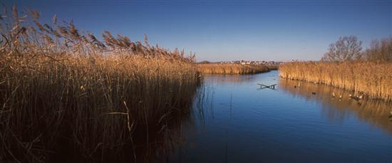 Radipole Lake Reedbeds