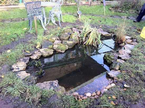 Creating a wildlife pond top tips from our wildlife for Creating a garden pond