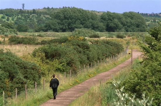 Dearne Valley, prime willow tit habitat. Image by Andy Hay (rspb-images.com)