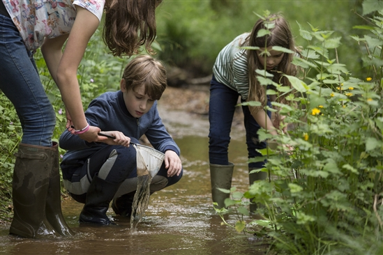 Stream dipping Image credit Andy Hay