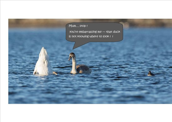 cygnet chat rooms Elandil b&b is located in nicholls rivulet, 10 minutes' drive from cygnet.