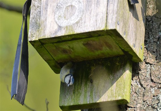 What bat box coombes churnet valley coombes valley for Bat box obi