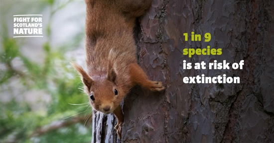 a squirrel climbs on a tree. Overlaid text reads '1 in 9 species at risk of extinction in Scotland'