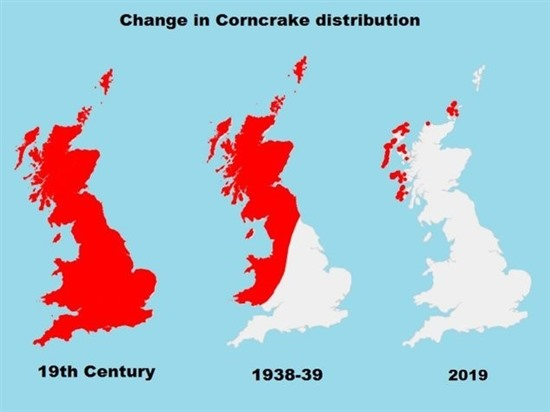 maps showing change in corncrake distribution over past centuries