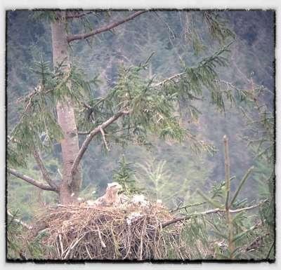 Iona on nest duty
