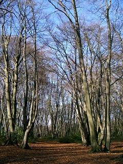 Epping Forest doesn't have money trees, but it will serve as a visual prompt for the clumsy analogy