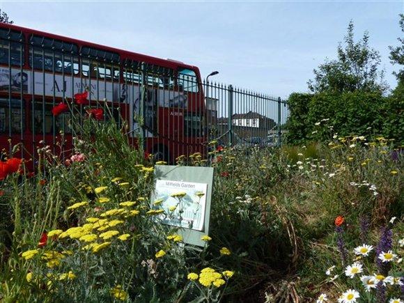 Millfields estate (East London) wildflower garden alongside their communal herb and veg plots
