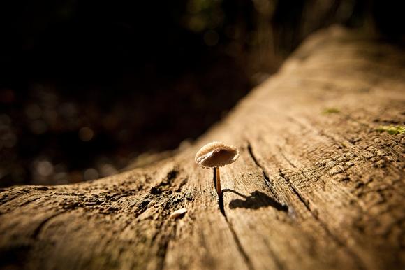 Kent fungus by Chris Guy CC