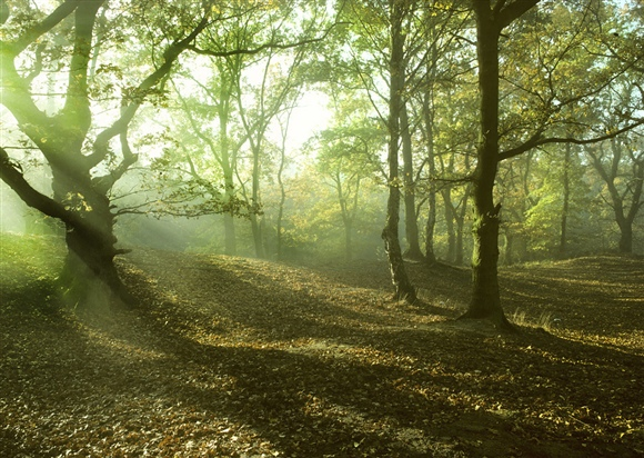 Woodland in the morning by Richard Revels