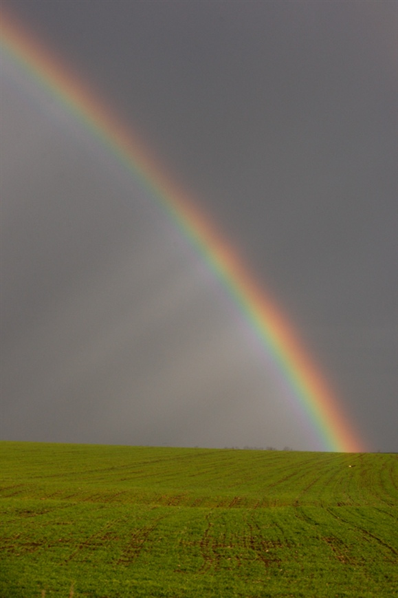 Rainbow, photo by Mike Lane (www.rspb-images.com)