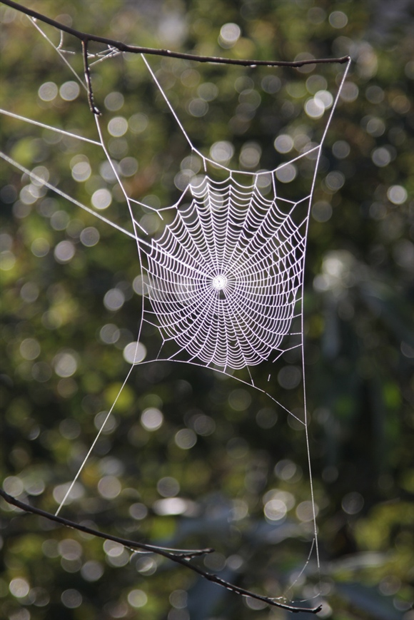 Frosted spider's web by cskk