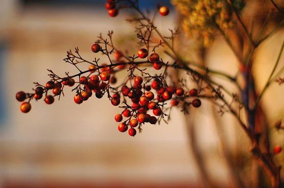 Berries, Image by Just Karen (http://www.flickr.com/photos/curiouspixels/)