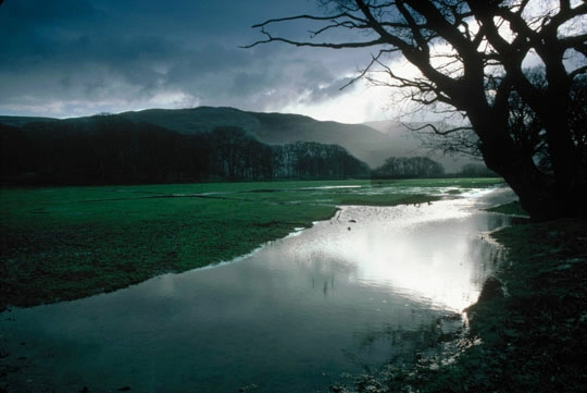 Ynys-hir nature reserve. Photo by Mike Read (rspb-images.com)