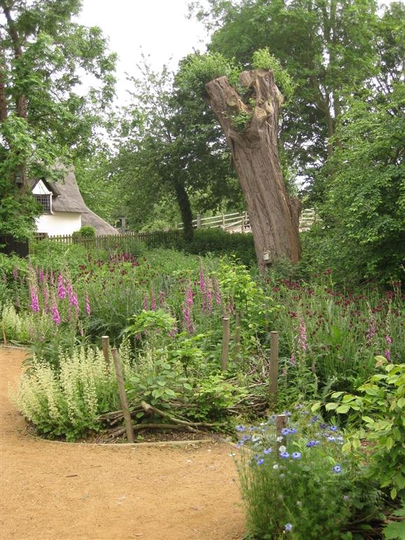 Foxgloves, ornamental thistle and Nigella