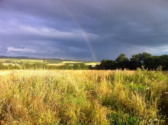 Area of rough grassland at Tim & Chis Prices' farm in Warwickshire (by Kirsty Brannan)