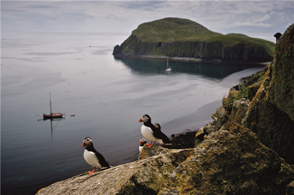 3 puffins on Shiants