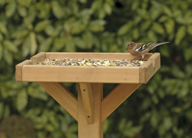 Chaffinch on a food table