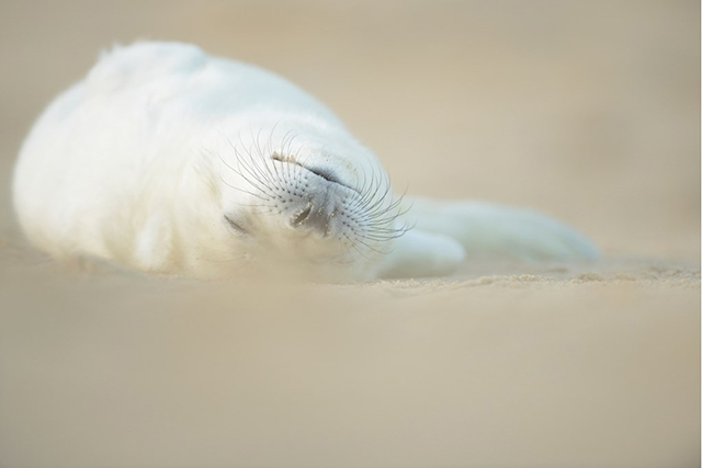 Seal on beach photograph