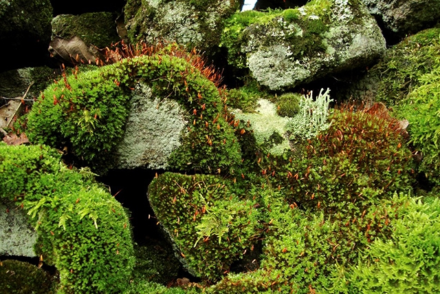 What's the difference between moss and lichen